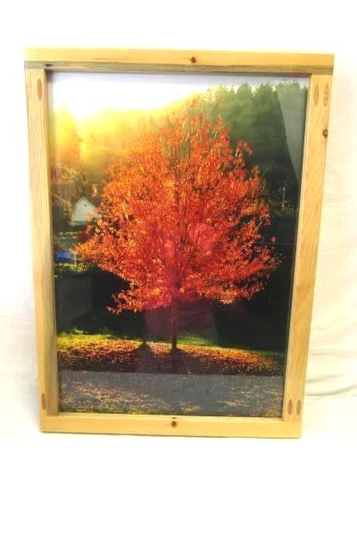 """Photograph Print of a Tree with Fall Foliage 30"""" X 22"""" With Handcrafted Frame"""