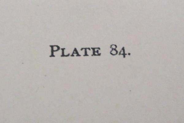 1890 Audubon BALD EAGLE with Prey Adult Bird Rabbit Plate 84