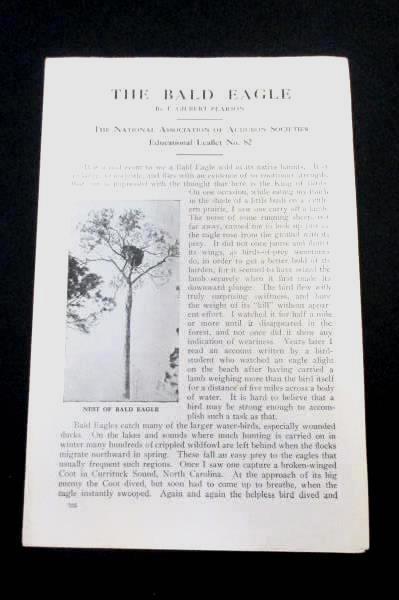 The Bald Eagle Gilbert Pearson Audubon Society Leaflet Lithograph Print