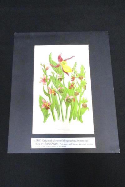Chromolithograph Botanical Print Ann Pratt 1880 Common Lady's Slipper Flower