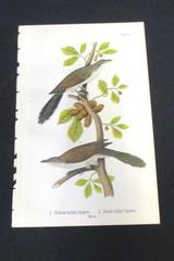 Chromolithograph Bird Print Plate Number 89 Yellow & Black Billed Cuckoo Males