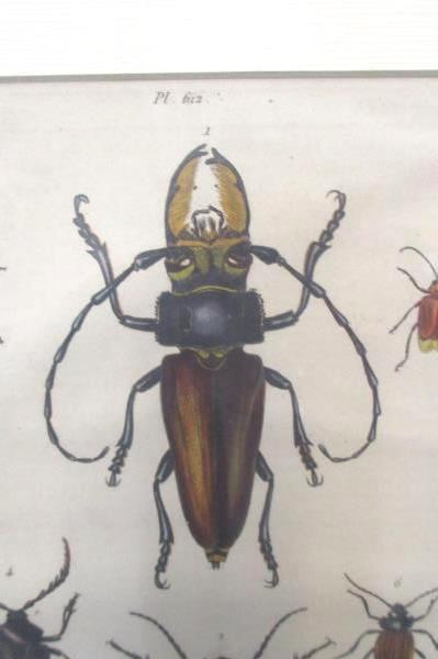 Guerin Natural History Print Litho Dictionnaire Pittoresque d'Histoire Naturelle