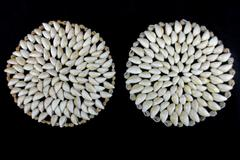 Lot of 2 Cowrie Shell Candle Holder Stand Accessories White Beige