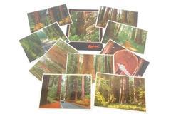 Lot of 10 Vintage Redwood Prints Postcards California Redwood Forest