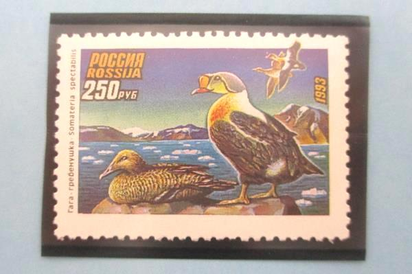 1993 Russia Duck Stamp Mint Collection Tri-Fold Ivan Kozlov National Wildlife