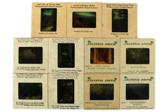 Lot of 11: Assorted Vintage 35 mm Color Slides of Plants and Popular Places