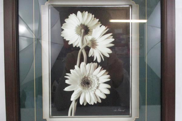 Beautiful Shadow Box Daisy Black And White Print Artist Signed