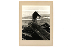 "9.5"" x 7"" Driftwood Photo By Tim Ford Dated 1975 Mounted and Ready To Frame"