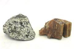 Lot of 2 Natural Rough Rocks Granite Black & White Petrified Wood Earth Tones